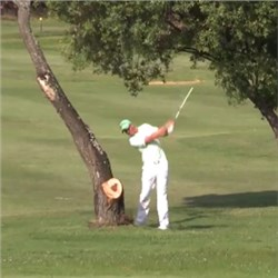Pro Golfer Ricochets Ball off Tree Straight into His Nether Region
